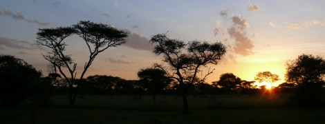 Amazing Tanzania: Serengeti National Park