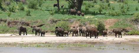 Amazing Tanzania: Tarangire National Park